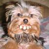Billy Teeth Dog