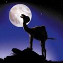 Camel Mond